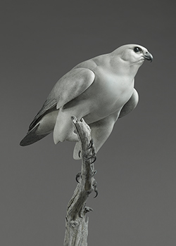 Link to Nick Bibby's Bird Sculptures