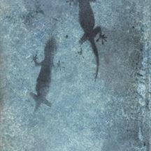 Product Photo - Gecko Photine