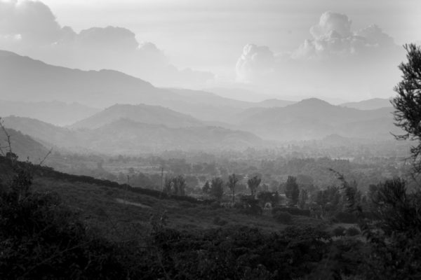 Gorilla View I