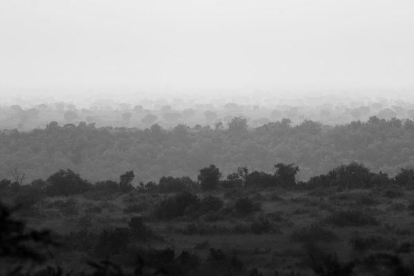 Gorilla View II
